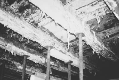 Figura: sviluppo del fungo del legno (merulio) attraverso una struttura del pavimento che ostacola la diffusione Fonte: FUSSBODEN ATLAS®